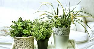 common houseplants for renters a pinterest roundup steve brown