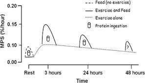physical exercise wikipedia