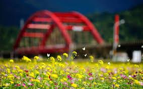 summer flowers butterflies 7039154