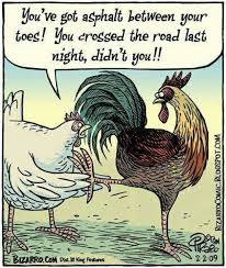 Rooster Jokes Meme - pin by kim wendt on chiks pinterest humour funny things and