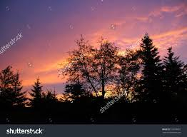 backyard sunset stock photo 510793837 shutterstock