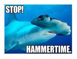 Shark Meme - shark funny pictures impremedia net
