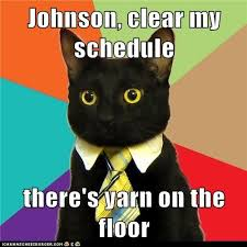 Best Memes Of 2011 - the 40 best memes of 2011 yarns cat and hilarious