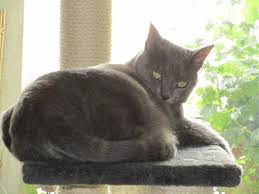 qui pisse sur le canapé chatte craintive qui fait pipi tous les jours nuit sur le canapé