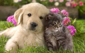 cute cats and dogs wallpaper wallpapersafari