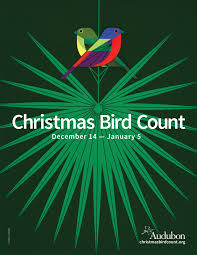 christmas bird count compiler resources audubon