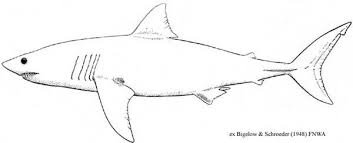 magic beach shark template alison lester pinterest shark