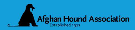 afghan hound racing uk racing activities the afghan hound association