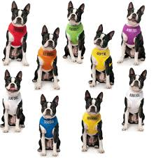 Halo For Blind Dogs Blind Dog Ebay
