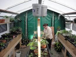 backyard greenhouse crafts home
