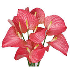 Send Flowers Online Send Flowers To Bangalore New Year Flowers To Bengaluru Flower