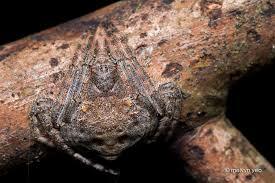 wrap around wrap around spider by melvynyeo on deviantart