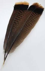 how to make turkey feathers best 25 bronze turkey ideas on turkey bird tom
