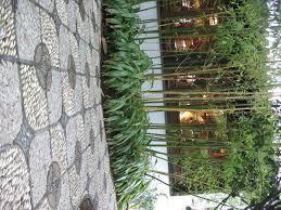 Bambus Garten Design Bamboo Landscape Photographs