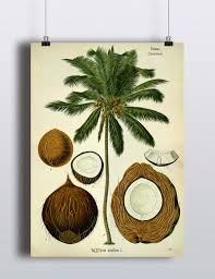 antique palm tree print coconut illustration poster tropical