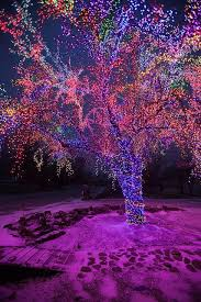 christmas lights in missouri the magic tree on christmas morning columbia christmas morning