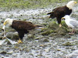 Alabama wildlife tours images Whale watching and wildlife tours juneau ak top tips before jpg