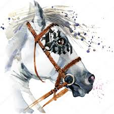 white stallion watercolor drawing white horse watercolor horse