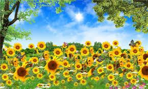 foto wallpaper bunga matahari the garden of sunflower wonderful scenery design wallpaper for home