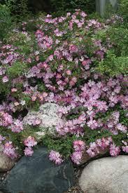 Fragrant Garden Plants 352 Best Garden Plants Roses Images On Pinterest Garden Plants