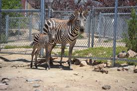 Nevada wildlife tours images The 8 best animal attractions in nevada jpg