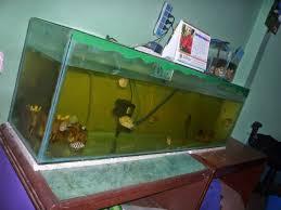 table aquariums loversiq