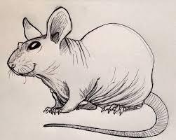 hairless rat i drew rats