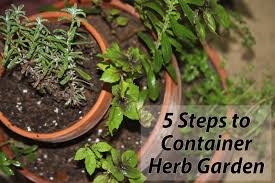 indoor herbs to grow love to live in pensacola florida starting an herb garden in fl