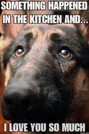 Puppy Face Meme - dog face meme