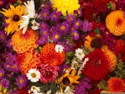 desktop wallpapers flowers backgrounds spring flower medley