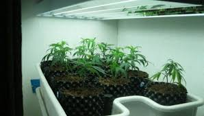 best grow lights for vegetables outstanding lighting lights for seedlings 23 grow lights for
