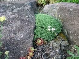 267 best garden plants wish list images on pinterest garden