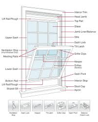 double hung window anatomy images learn human anatomy image