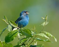 birds archives volusia naturalist