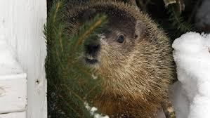 groundhog trivia badgers bears hedgehogs lore
