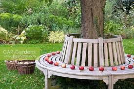 gap gardens wooden bench around tree baskets with apples