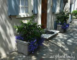 Flower Boxes That Thrive In by Window Box Planters Of Charleston Sc Birds And Blooms