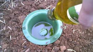 earwig trap that has results youtube