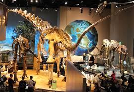 file perot museum alamosaurus jpg wikimedia commons