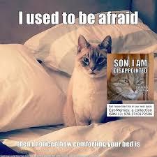 Meme Copyright - 34 best hilarious cat memes images on pinterest