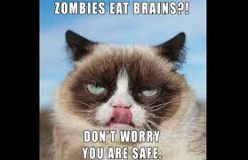 Cat Facts Meme - facts about grumpy cat 10 things you did not know about grumpy cat
