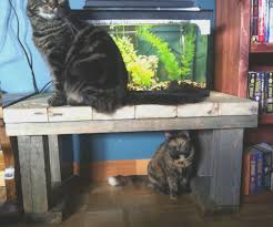 coffe table how to build an aquarium coffee table decorating