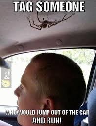 Spider Meme - spider memes meme city