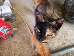 Barn Cat Names Farmtastic Criminy That Stinker Cat