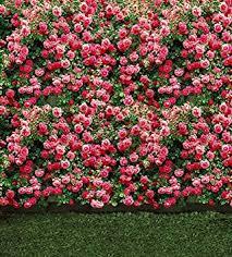 wedding backdrop flower wall wonderful flower wall polyester cotton wedding photo