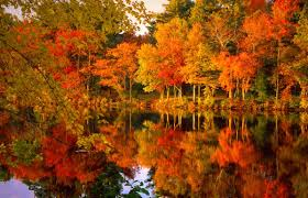 free fall wallpaper for computer fall foliage backgrounds wallpapersafari