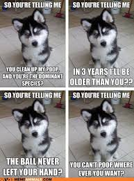 Pun Husky Meme - animal memes picmia