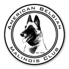 belgian sheepdog crossword american belgian malinois club abmc knowledge pinterest