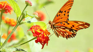 butterfly and flowers hd photos nature