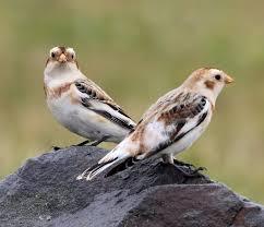 steve bird u0027s wildlife more birding in rhode island and cape cod